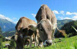 animais e produtos derivados