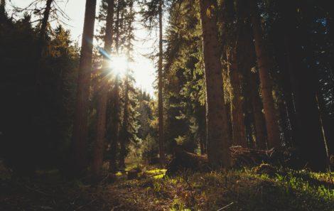 Castilla-La Mancha somete a información el Anteproyecto de Ley de Evaluación Ambiental