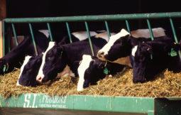 Registro General de establecimientos en el sector de la alimentación animal
