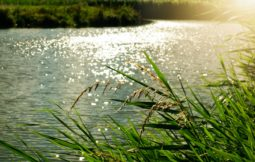 rd_proteccion_aguas_producida_nitratos_fuentes_agrarias