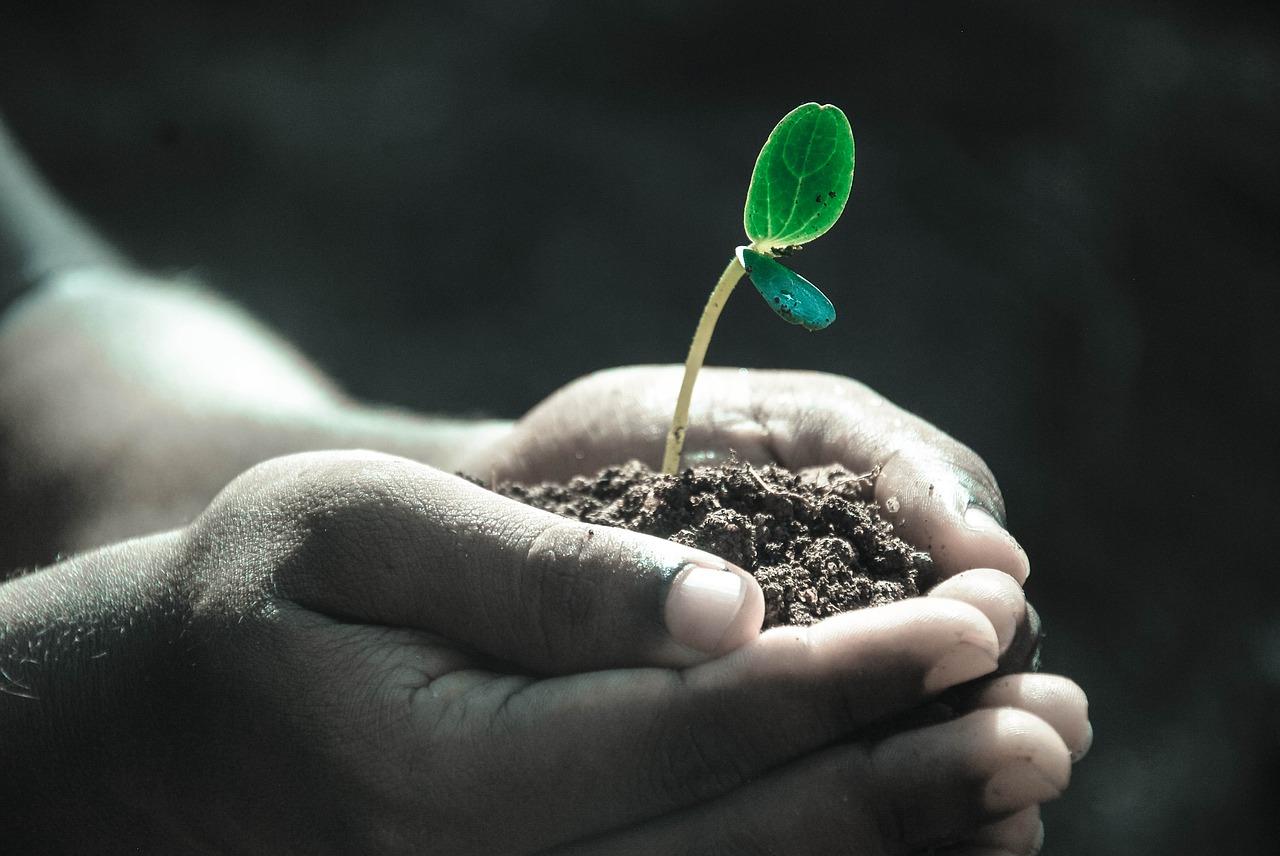 líderes en el control ambiental de Suelos