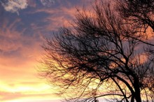 sunset-clouds-and-leafless-tree215