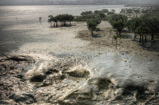 Curso de Gestión de suelos contaminados