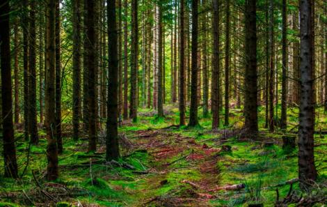 ¿Qué es el EMAS (Sistema comunitario de gestión y auditoría medioambiental)?